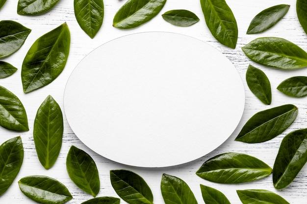 Arranjo plano de folhas verdes com objeto vazio redondo