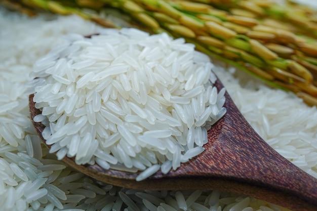 Arroz branco do jasmim com grão do ouro da exploração agrícola da agricultura.
