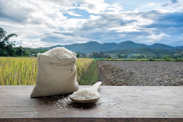 Arroz branco ou arroz branco não cozido com o fundo do campo de arroz