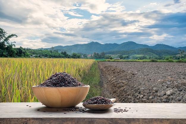 Arroz de arroz ou não cozido em uma tigela de madeira e colher de pau com o fundo do campo de arroz
