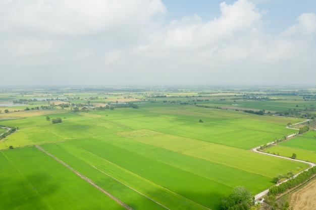 Arroz de campo com paisagem verde padrão natureza