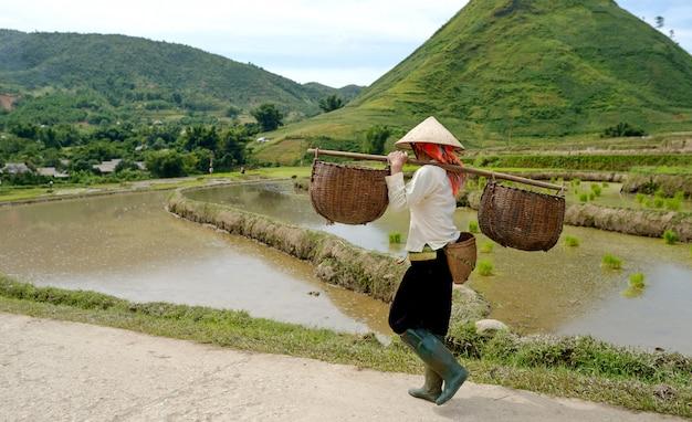 Arroz de montanha no vietnã