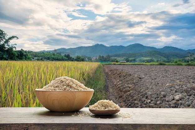 Arroz integral ou arroz não cozido com o fundo do campo de arroz