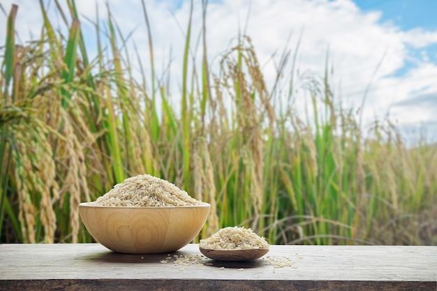 Arroz integral ou arroz não cozido com tigela de madeira e colher de pau o fundo do campo de arroz