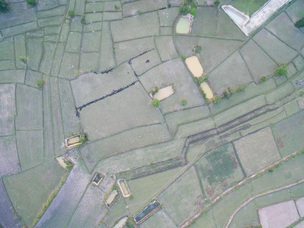 Arroz terraço aerial shot