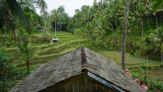 Arroz, terraço, campos, ubud, bali