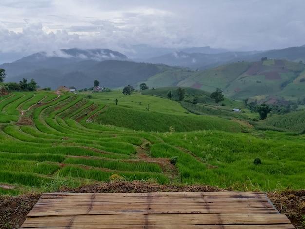 Arroz verde durante a estação das chuvas em tailândia. terraços de arroz pa bong piang em chiang mai