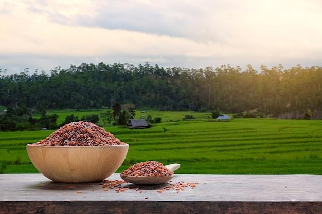Arroz vermelho ou arroz não cozido com o campo de arroz em terraços