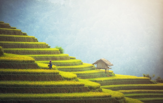 Arrozais em terraços de mu cang chai, yenbai, vietnam. paisagens do vietnã.