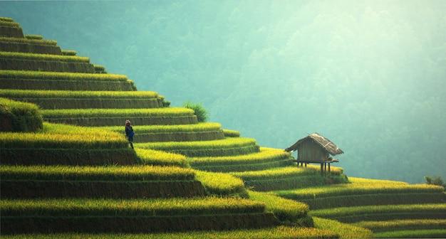 Arrozais em terraços de mu cang chai, yenbai, vietnam.