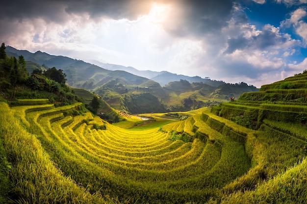 Arrozais preparar a colheita no noroeste do vietnã
