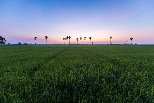 Arrozal com palmeiras e nascer do sol na província de phatthalung, tailândia