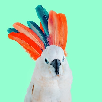 Arte colagem mínima papagaio e penas. arte moderna divertida