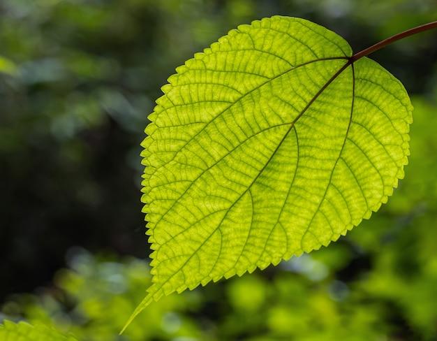Arte do outdoorse da folha verde