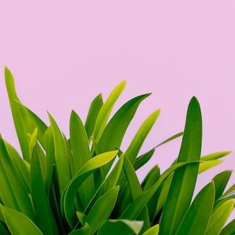 Arte moderna amantes de plantas plante ideias minimalistas em rosa