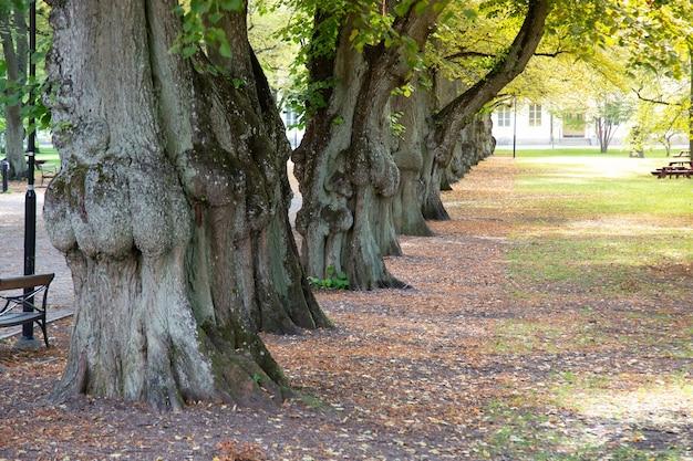 Árvore alinhada no parque da cidade.