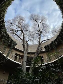 Árvore alta crescendo através de uma abertura circular em um telhado