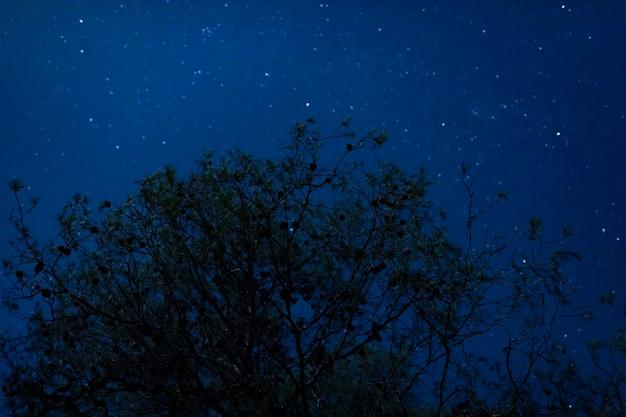 Árvore alta de ângulo baixo com fundo de noite estrelada