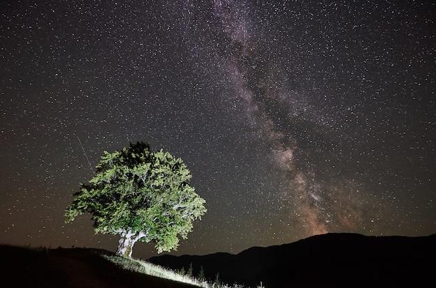 Árvore alta solitária iluminada sob incrível céu estrelado e via láctea nas montanhas