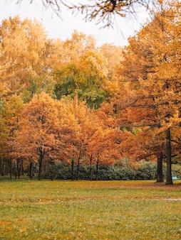 Árvore amarela de outono em um parque