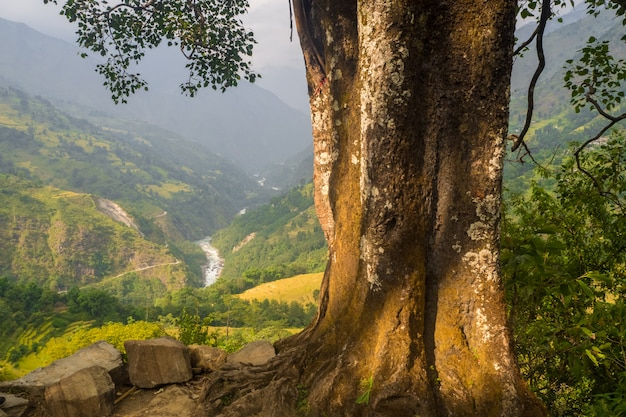 Árvore antiga no nepal