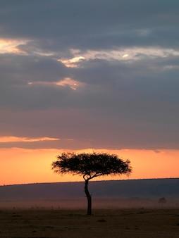 Árvore ao pôr do sol no Quênia África