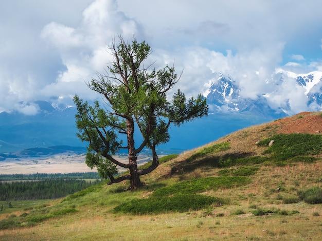Árvore bizarra e solitária no fundo de montanhas cobertas de neve