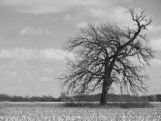Árvore, blackandwhite