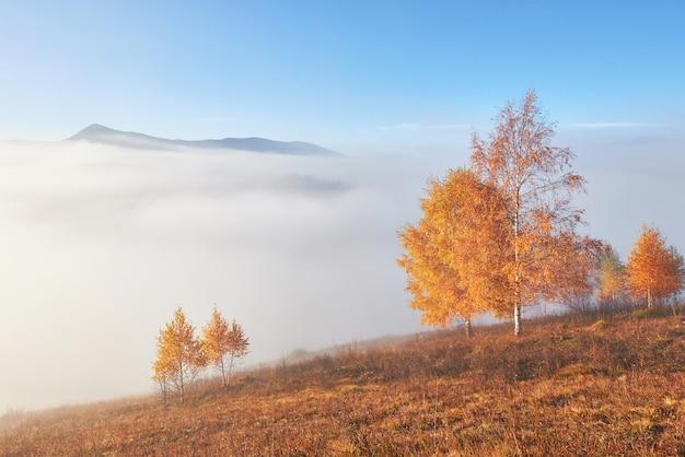 Árvore brilhante na encosta de uma colina com vigas ensolaradas no vale da montanha coberto de névoa.