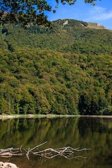Árvore caída encontra-se na água. lago biogradsko no parque nacional biogradska gora (monte