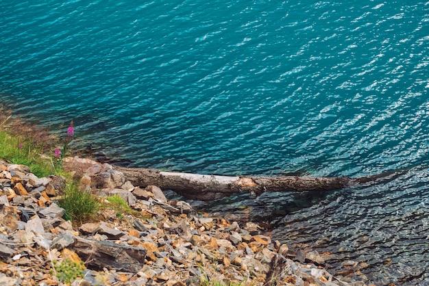 Árvore caída na beira da água. textura brilhante da superfície azul do lago de montanha. costa pedregosa com ricas vegetações das terras altas. flora das montanhas. fundo pedregoso em água transparente. copyspace.