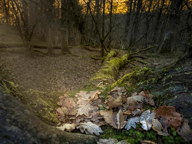 Árvore caída na floresta