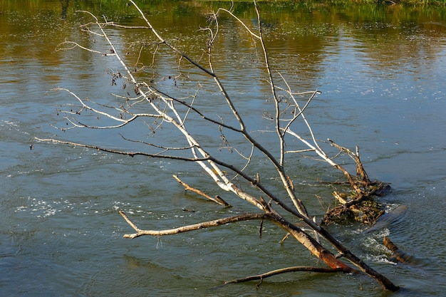Árvore caída no rio
