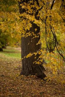Árvore coberta com folhas douradas no parque no outono