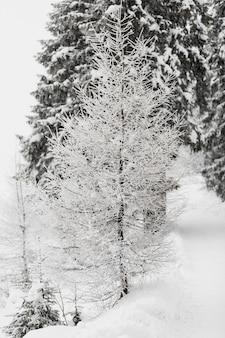 Árvore coberta com hoar na floresta