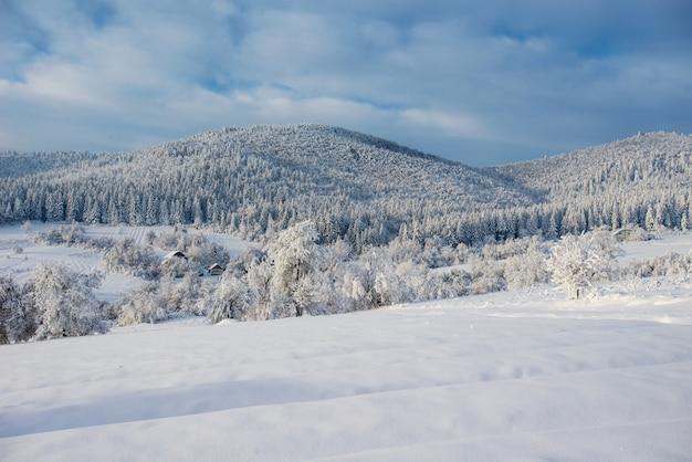 Árvore coberta de neve de inverno mágico