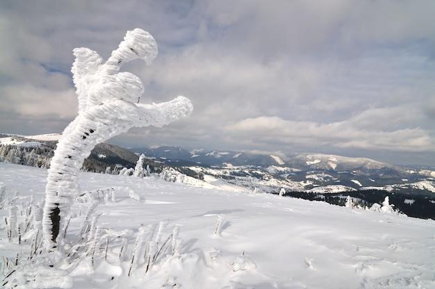 Árvore coberta de neve em um fundo de montanhas