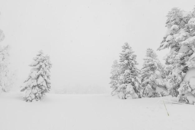 Árvore coberta de neve no dia de tempestade de inverno nas montanhas da floresta