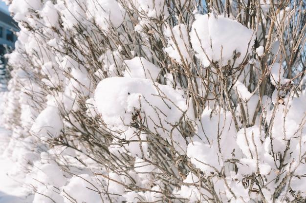 Árvore coberta de neve