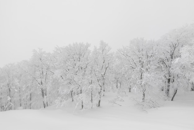 Árvore, coberto, neve, inverno, tempestade, dia, floresta, montanhas