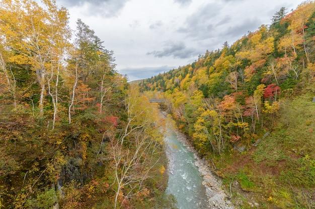 Árvore colorida no outono perto da cachoeira de shirahige