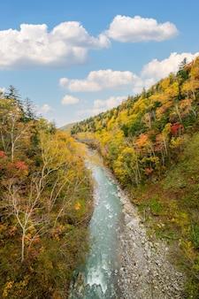 Árvore colorida no outono perto da cachoeira shirahige, biei, hokkaido, japão
