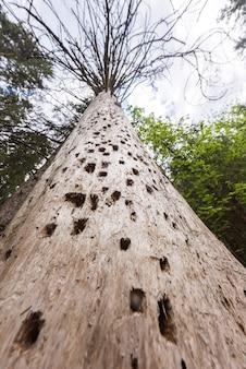 Árvore com buracos na floresta