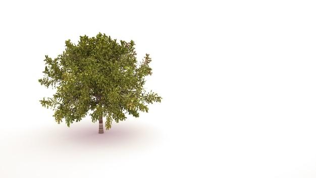 Árvore com folhagem verde, elemento do paisagismo. objeto isolado de desenho ghaphic em um fundo branco, ilustração 3d.