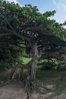 Árvore com galhos densos entrelaçados