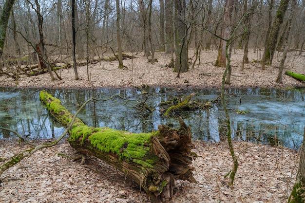 Árvore com musgo na floresta de inverno