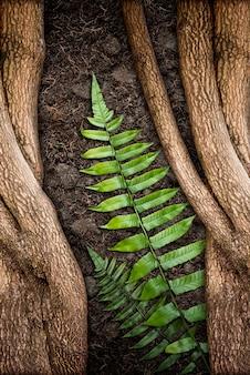 Árvore com samambaia verde e textura do solo
