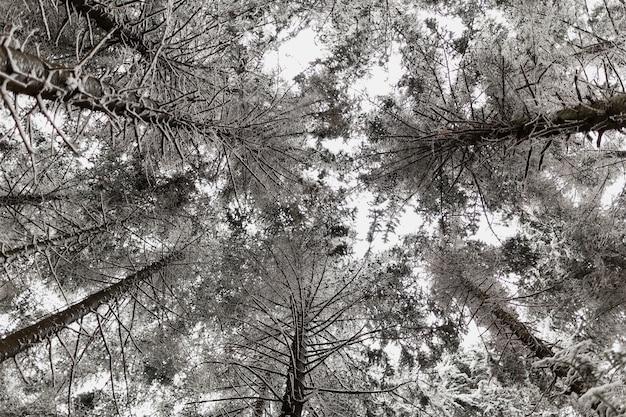 Árvore com tops de neve