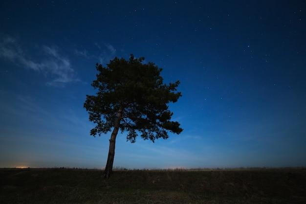 Árvore conífera em uma superfície do céu estrelado à noite