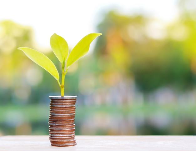 Árvore crescendo a partir de moedas de perto